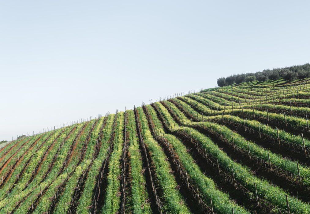 paysage de vignes au chateau troissy internat college lycee cinema 7e art
